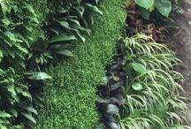 ogród wertykalny