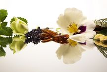 Aromatherapy / Benefits of various essential oils