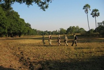 Walking Safaris / The South Luangwa National Park is world renown for walking safaris. Walking safaris are a great opportunity to be at one with nature. Our qualified and highly experienced safari guides and armed national park rangers will escort you safely into the true and unspoilt African bush during these safari activities. The Luangwa Valley is one of the few places in Africa where it is possible to walk amongst wildlife, which allows you to fully immerse yourself in African impressions, smells and sounds.