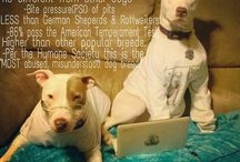 Pit bulls ♡  / by Adrienne Whatley
