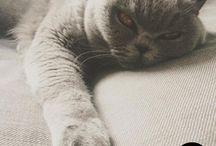 Louna's Cat