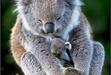 Australië!