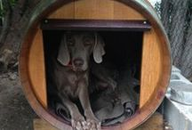 Wine barrell dog