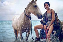 Surfer Horse