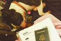 Pet-friendly travel / bring fido!