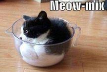 Cheeky Kitties