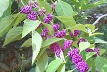 Purple / I love to use purple in my garden.