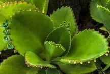 hiervas medicinales el futuro