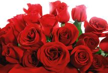 Rose Lovers by Ilya Paltnik / Check here different roses for rose lovers.