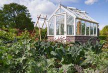 Gewächshaus/greenhouse