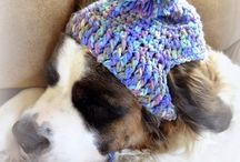Crochet  for dogs