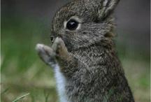 Animaux / Photo d'animaux trop mignon ❤️