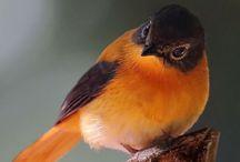 Pássaros | Passarinho