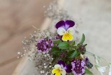 Violets and Pansies / My favourite flowers