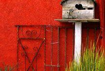 Birds - houses