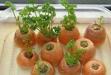 Reciclaje de verduras