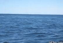 Whaleish
