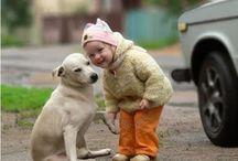 Köpekler / Köpekler ile ilgili bilgiler, komik anlar, videolar... Kısacası köpeklere dair her şey!