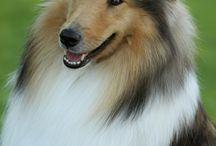Honden / Alle rassen
