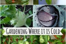 Gardening great ideas