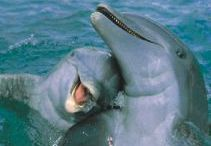 δελφινάκια μου όμορφα