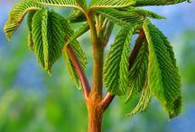 Wonderful trees in Ruusunmekko