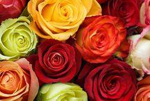 Gardening: Red&Orange colour schemes.