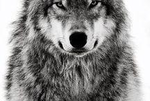 wolffyy