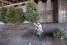 Suspended Forest: 2013 Public Art Christmas Tree Installation