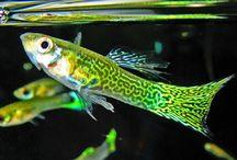 easy fish breeding