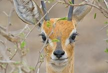 South african wild life / I have seen them