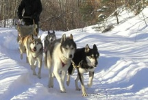 Winter activities / You can do all this in or around Lapiosalmi Wilderness Center!