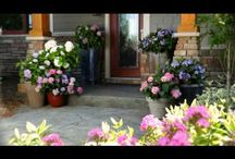 Endless Summer Hydrangea Videos