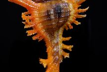 Kerang laut