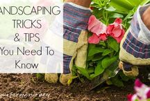 Landscaping And Horticultural Tips / Landscaping And Horticultural Tips