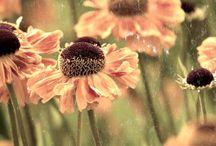 *flores*