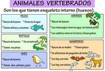 cartel animales vertebrados