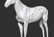 анатомия животные