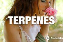 Terpenos