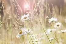 Léto budiž pochváleno / květiny, dekorace