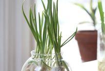 Green / Plants