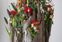 Flowering / Planting indoor