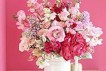 Pinks / Pink flowers