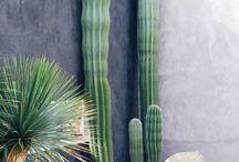 ogród kaktusowy