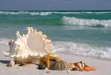 Beach vacation / by Rebekah Warren