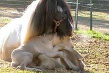 paarden en veulens