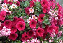 Kukkia ja puutarhaa