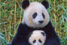 Mamãe e babies