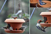 κήπος και πουλιά