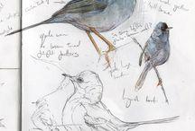 SKETCHBOOK | birds